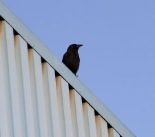 Geometry Crow by laracoa