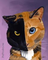 Venus the Two-Faced Kitty by CharReed