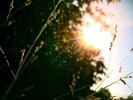 Summer Webs by linde-lazer