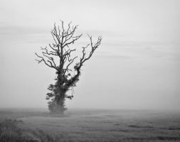 Minimalist Tree in Mist by BusterBrownBB