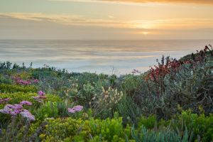 Yzerfontein Sunset by Redelinghuys