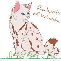 My OC ~ Redspots of Windclan by Leapingriver