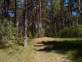 Papsaare forest 18 by MASYON
