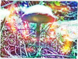 magic mushroom into wonderland by fraeuleinkirsten