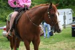 Quarter Horse Stock 2 by dramionewhynothraco