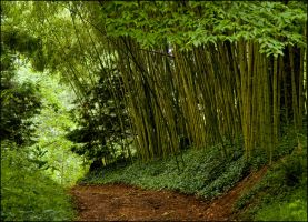 Bamboo Path by bamako