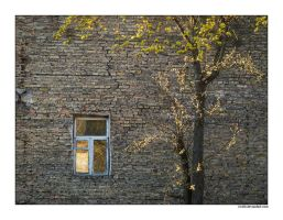 Another Window in the Wall by rici66