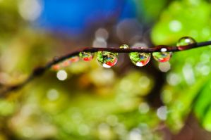 Queueing droplets... by Wings-of-Light