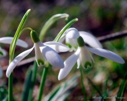 Spring Is Here by AngelaLeonetti