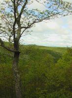 Appalachian Trail - CT 01 by Ovid2345