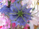 Odd blue flower by Cowie