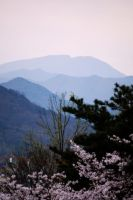 Spring in Daegu by SoCallMeNothing