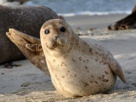 Tilted seal by fosspathei