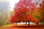 Red Tree in the Fog by Marilyn958