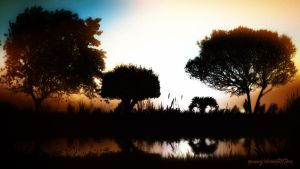 Trees Silhouettes by Romenig