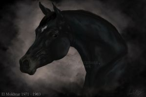 Black Arabian El Mokhtar by BLACKNIGHTINGALE81