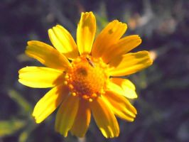 Tiny Insect On Yellow Flower by TheGerm84