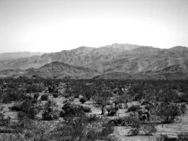 Joshua Tree by oofer
