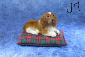 Spaniel 1:12 scale miniature by squizzy7o7