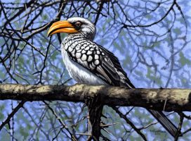 Southern Yellowbilled Hornbill by WillemSvdMerwe