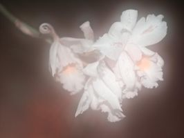 Faded Orchid #3 by KBeezie