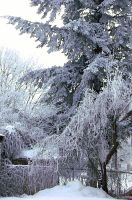 my frozen pear tree and vines by crimsonravenwarrior