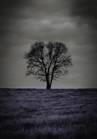 The Tree by DownedSystem