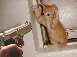 Dont shoot the kitty by whitefrog2