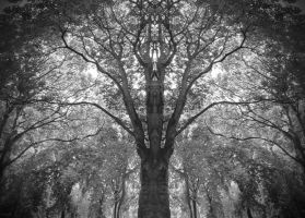 The Tree by greenday862