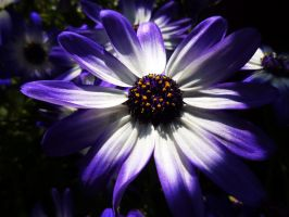 A Taste Of Purple. by iAngelRhii