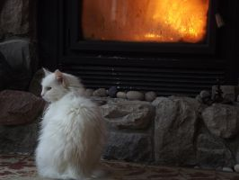 Resting by the Fire by Detdre
