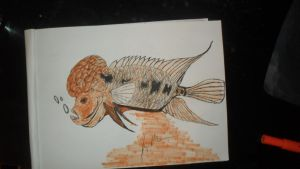 Drawing of flowerhorn cichlid by LivingForTheFuture