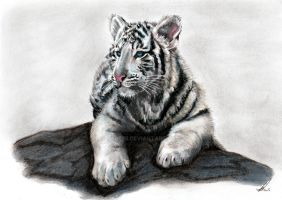 White Tiger cub by salt25