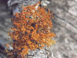 Tree Moss by TheGerm84