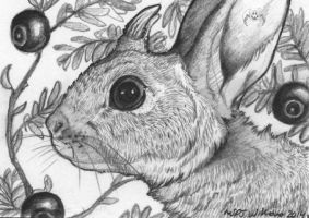 ACEO: Crowberry by vladimirsangel