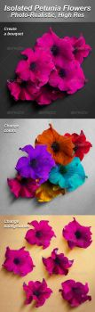 6 Isolated Photo-Realistic Petunia Flowers by Ondrejvasak