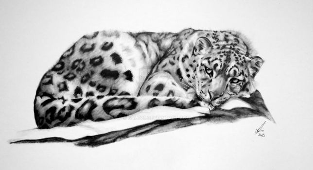 Snow Leopard-Resting by salt25