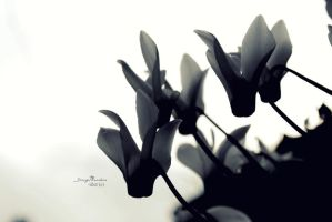 Black petals, white sky. by Isatyr