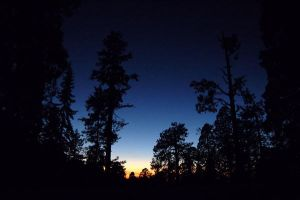 Dusk at Sequoia National Park by esee