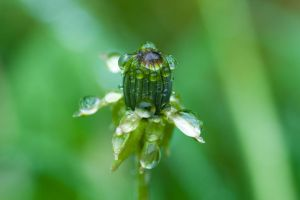 Water Drops by sudd