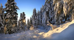 Local Forest in Winter by FlorentCourty