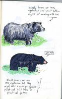 Bears and more bears by crisurdiales