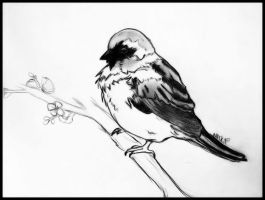 Sparrow by marquisee
