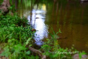 Beauty of water copy by salaehya