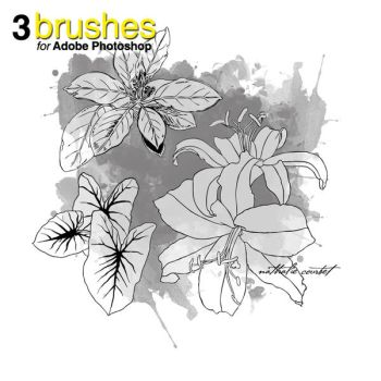 Flower Brushes for Adobe Photoshop pack 2 by nataliecourbete