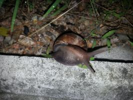 Snail 14Aug2014 7 by RiverKpocc