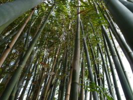 Bamboo Forest by shofawnda