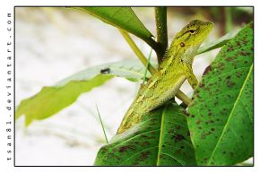 Grinning Gecko by dominickleo