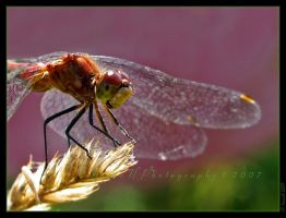 Obstinate critter by WaitingForTheWorms