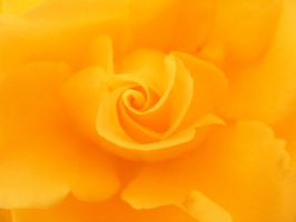 Yellow by lovethecolour